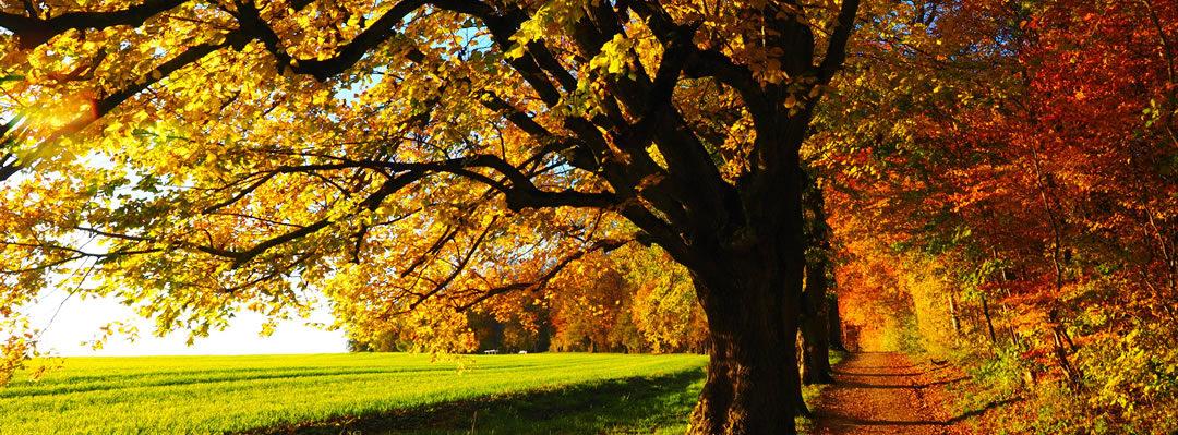 Waldweg Herbst